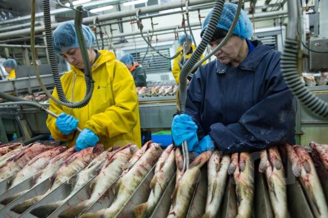 того существуют работа в артёме рыбообрабочиком всех