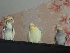 Попугаи передержка