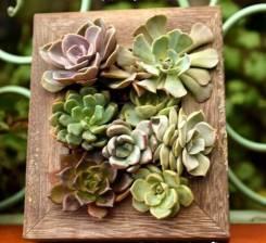 Основа композиции в виде рамки для суккулентов, орхидей, тилансий!