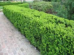 Стрижка кустов кустарника