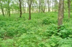 Предлагается к продаже земельный участок в Надеждинском районе. 1 500 кв.м., собственность, от агентства недвижимости (посредник). Фото участка
