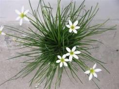 Растения и цветы.
