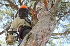 Спил деревьев, веток, корчевание пней! Опытная бригада