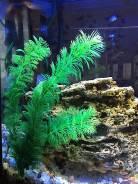 Декорации для аквариумов, террариумов.