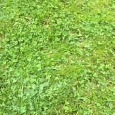Покос травы, Спил деревьев, Подрезка кустарников, деревьев скос травы