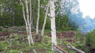 Бесплатно спилим деревья на вашем участке.