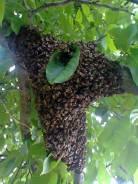 Поймаю прилетевших пчёл