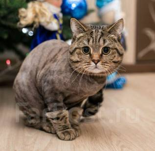 Стрижка кошек с выездом!