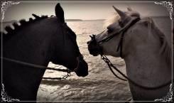 Конные прогулки в пригороде Владивостока