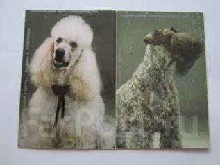 Календарики Собаки 1991 года. Таллиннский Клуб Собаководства.2 шт.
