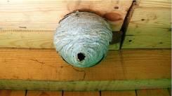 Гнезда ос и шершней удаление