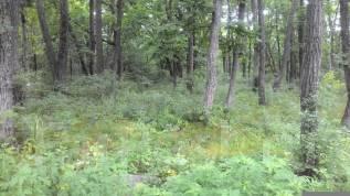 Земельный участок 13сот. на Садгороде. 1 300 кв.м., собственность, электричество, вода, от частного лица (собственник)