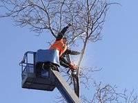 Спил подрезка корчевание деревьев недорого