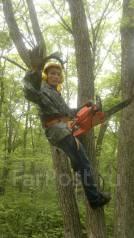 Спилю деревья, продам дрова