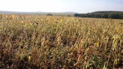 Земельный участок с/х назначения 500 Га. 4 340 000 кв.м., собственность, вода, от частного лица (собственник)