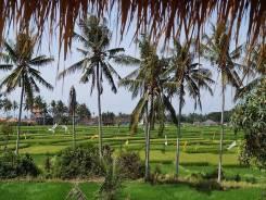 Вилла на о. Бали с видом на рисовые поля