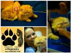 Обучение стрижки собак и кошек.
