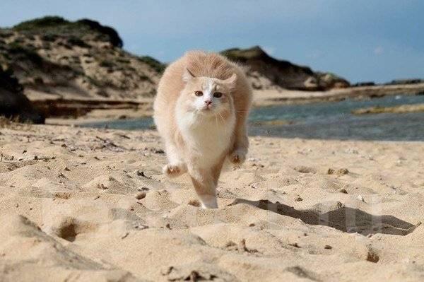Таиланд. Пхукет. Пляжный отдых. Белоснежный пляжи о. Пхукет Горящие туры