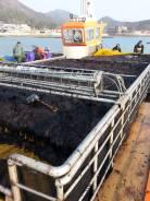 Работа. Добыча морской капусты. Южная Корея