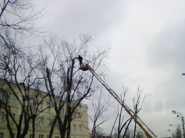 Спил подрезка деревьев корчевание. вывоз