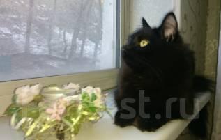 лечения кошка ищет кота владивосток всего при