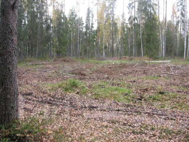 Спилим деревья на взаимовыгодных условиях.