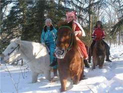 Конные прогулки по лесу. Скидки на лето - второй человек бесплатно. Акция длится до 30 июня