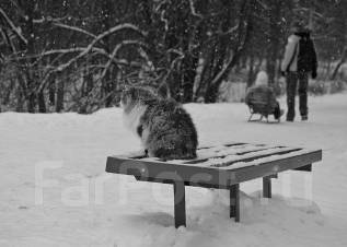 Уборка снега, вывоз снега!