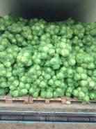 Зелень и овощи. Под заказ