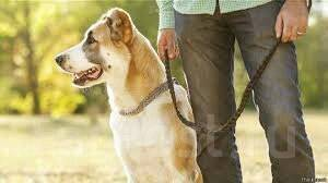 Выгул животных.