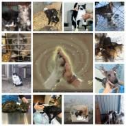 Протяни руку помощи нуждающимся животным!