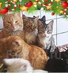 Отдам кошек, котов, котят п. Тавричанка