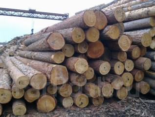 Круглый-лес-лиственница