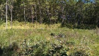 Земельный участок в по ул. Артековская (район Шамора). 2 500кв.м., собственность. Фото участка