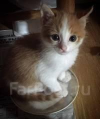 Котёнок рыже-белого окраса