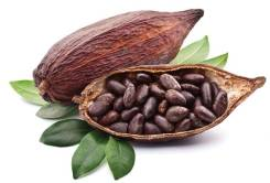 Какао-бобы. Под заказ