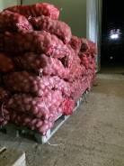 Картофель Удача фураж