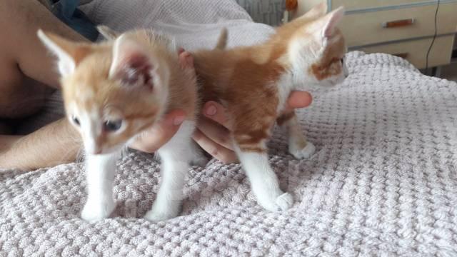 Отдадим в добрые руки, кошачьих детишек.