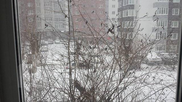 1-комнатная, улица Кирова 54. Вторая речка, частное лицо, 34 кв.м. Вид из окна днём