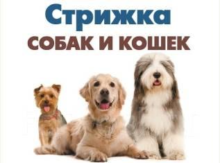 Дракономании фарпост владивосток животные собаки роскошны
