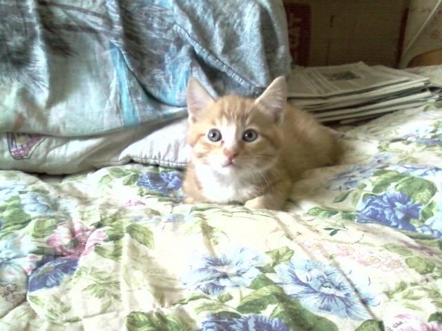 Котёнок рыжик