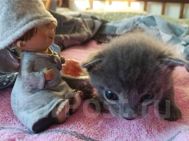 Отдадим в хорошие руки котенка по имени Том