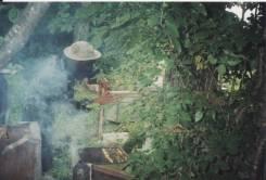 Пчеловод. Мёд. С. Самарка