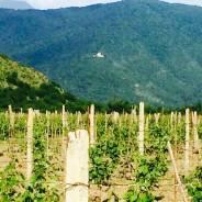 Продам землю с виноградом на территории Грузии