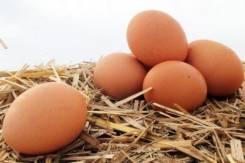 Яйцо куриное.