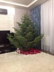 Натуральные таёжные елки, пихты с доставкой