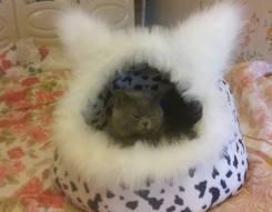 Лежанка-домик для кошек и собак.