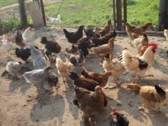 В рассрочку! Актуальный бизнес - домашняя ферма+земля в собственности