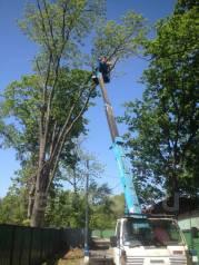 Спиливание аварийных деревьев, вывоз мусора спил аварийных веток.