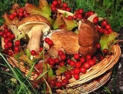 Скупка даров лесов Приморья